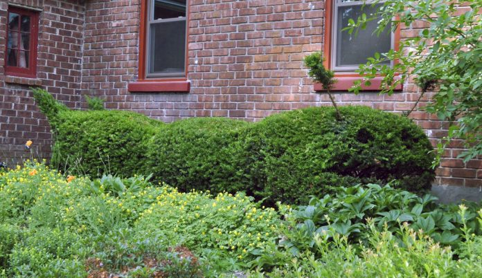 Topiary tips: When you want shrubs to double as sculpture