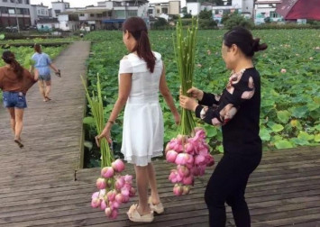 Chinese eco park forced to stay shut after tourists strip away all its lotus flowers