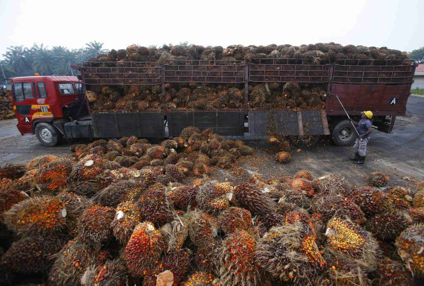 According to the Malaysian Palm Oil Board's data, Malaysia's palm oil export to India between January and April 2020 plummeted by 94 per cent to 96,145 tonnes, compared to 1.6 million tonnes in the same period last year. — Reuters pic